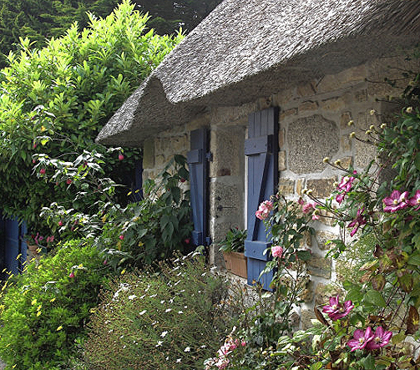 Cottage Flowers (233)